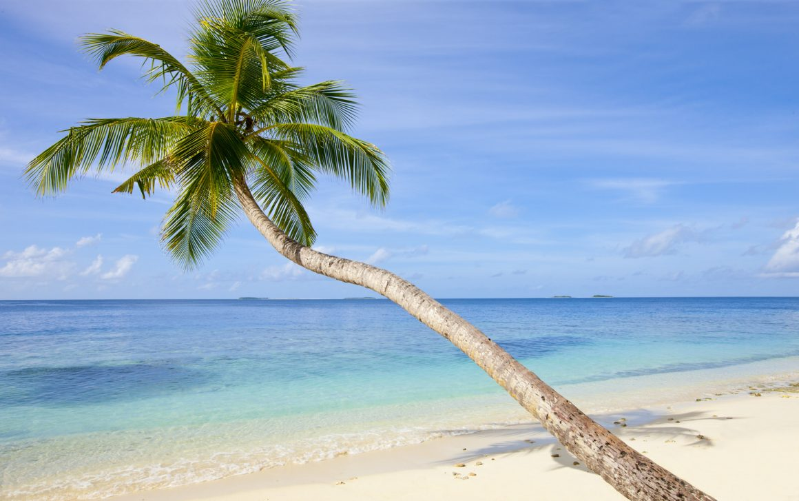 photography of palm tree on the maldives beach